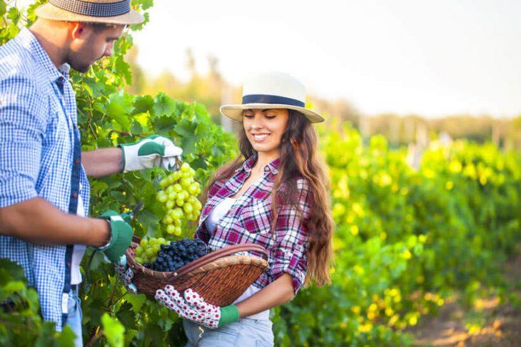 Datingsites voor boeren